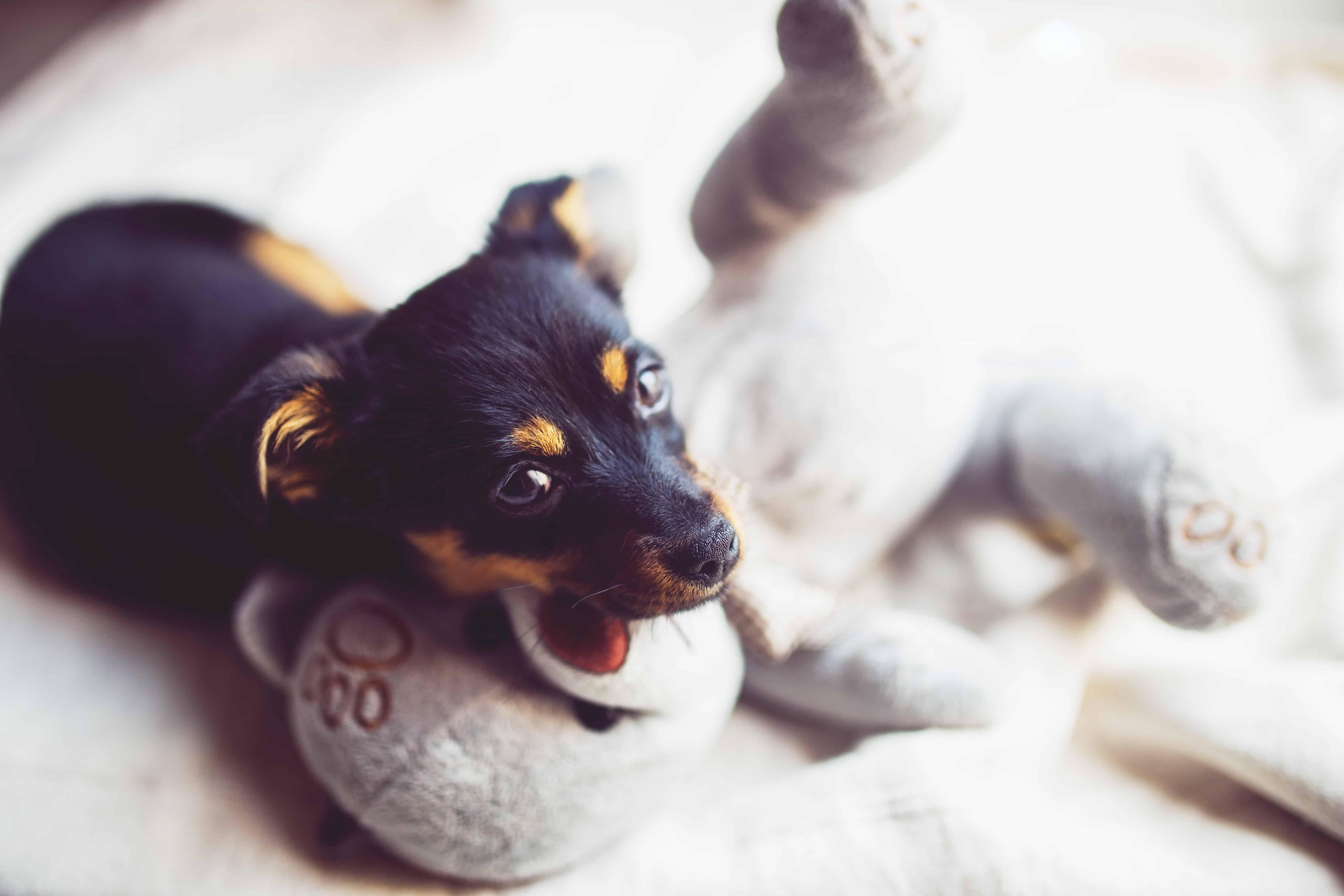 puppy-opvoeden