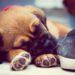 De ultieme puppy opvoed checklist! Alles wat je als nieuw baasje moet weten.